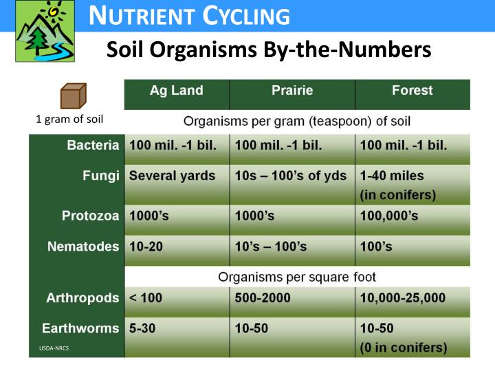 Soil Organisms By-the-Numbers
