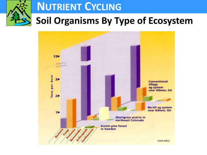 Soil Organisms By Type of Ecosystem