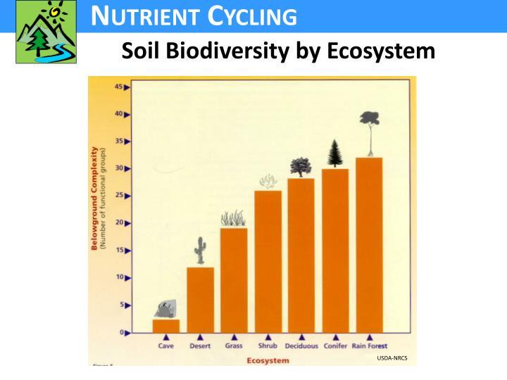 Soil Biodiversity by Ecosystem