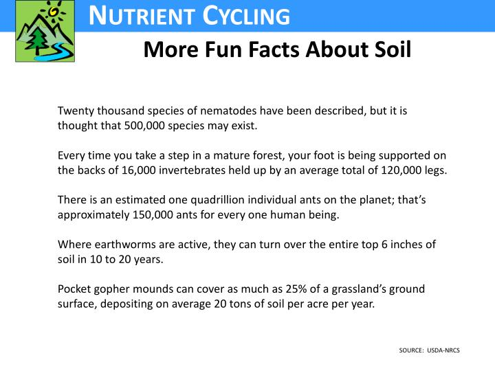 More Fun Facts About Soil