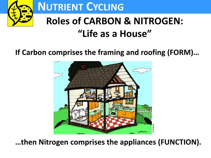 Roles of CARBON & NITROGEN: