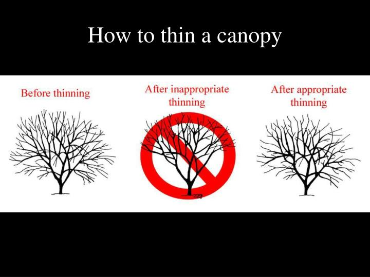 How to thin a canopy