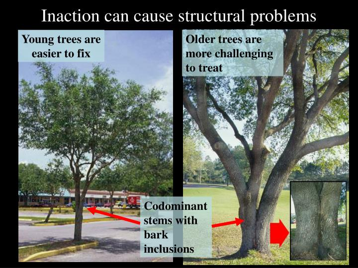 Inaction can cause structural problems