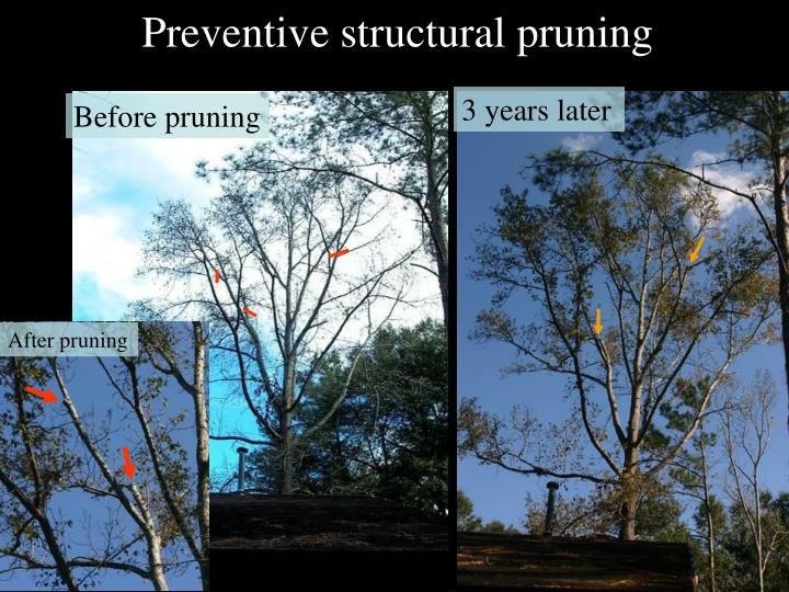 Preventive structural pruning