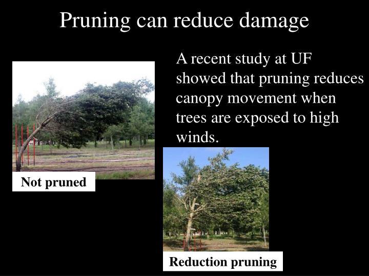 Pruning can reduce damage