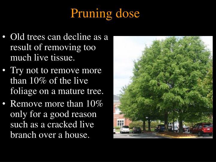 Pruning dose