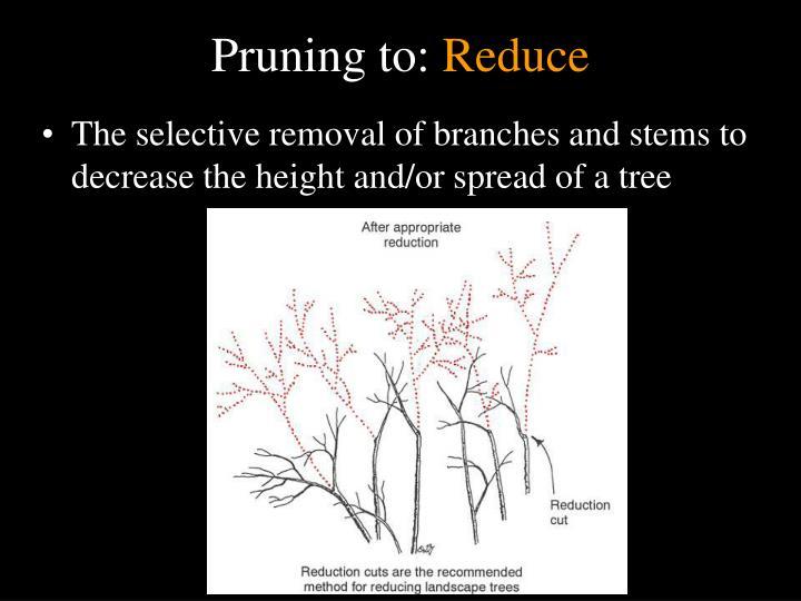 Pruning to:
