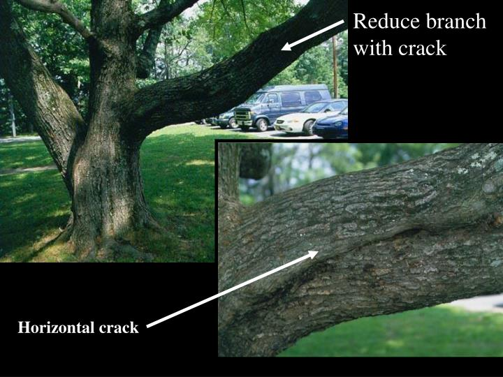 Reduce branch with crack