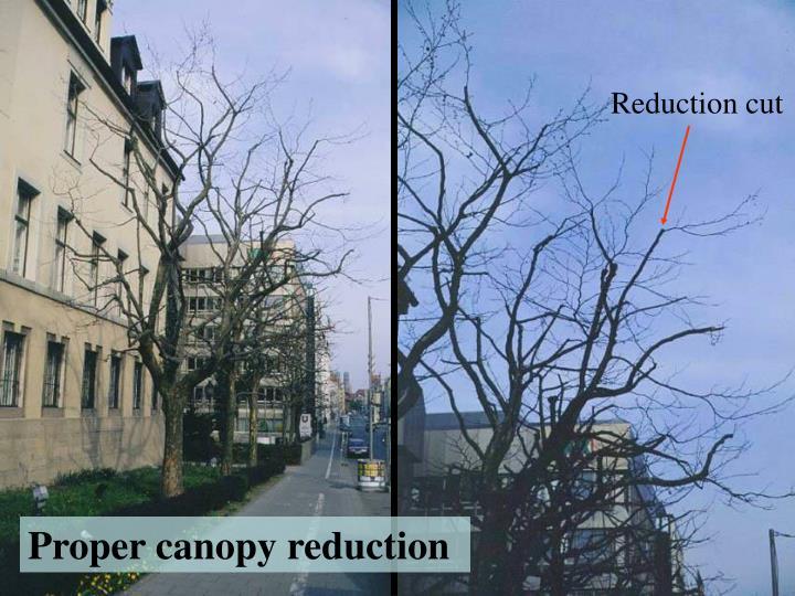 Reduction cut