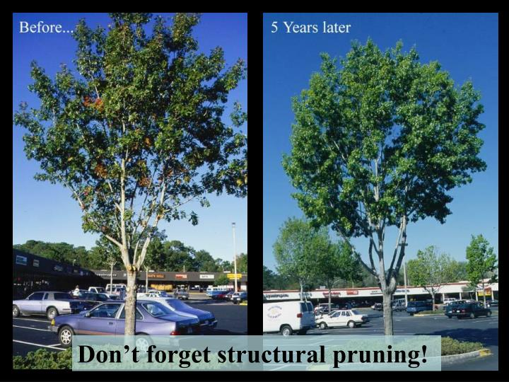 Don't forget structural pruning!