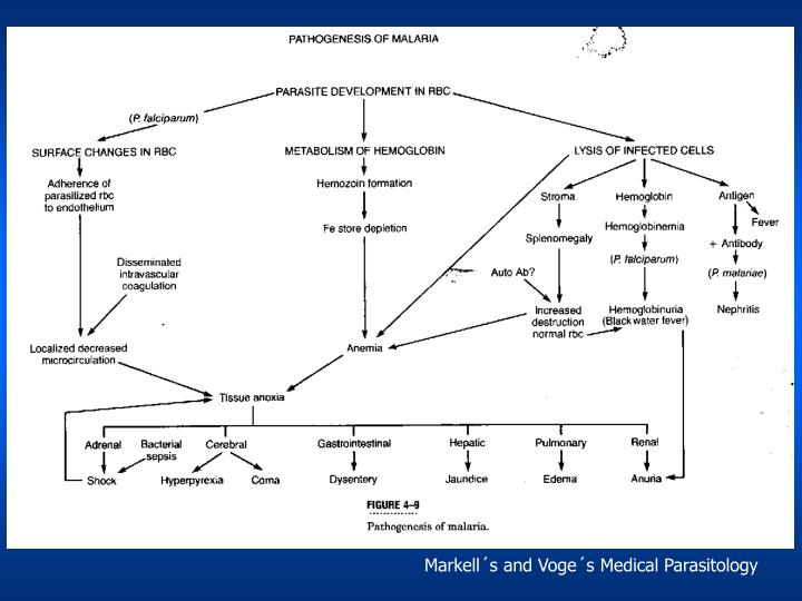 Markell´s and Voge´s Medical Parasitology