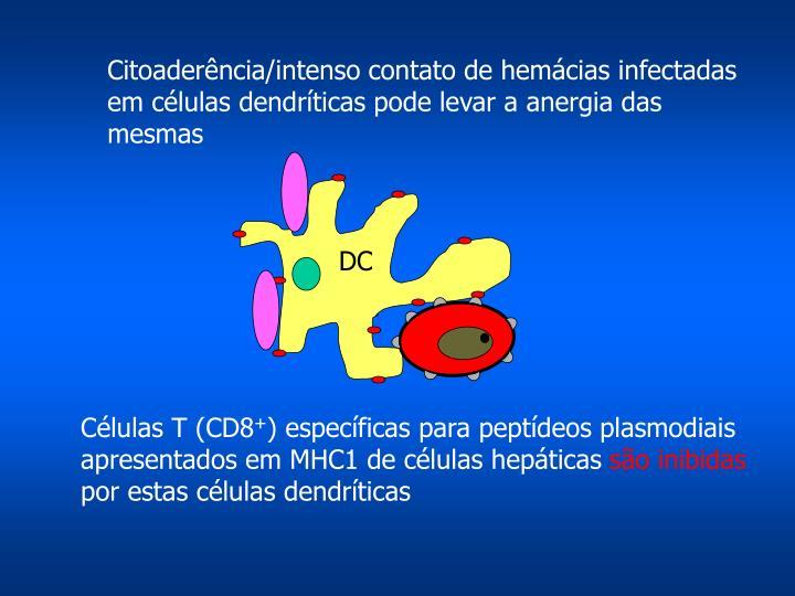 Citoaderência/intenso contato de hemácias infectadas em células dendríticas pode levar a anergia das mesmas