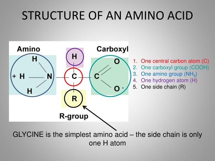 STRUCTURE OF AN AMINO ACID