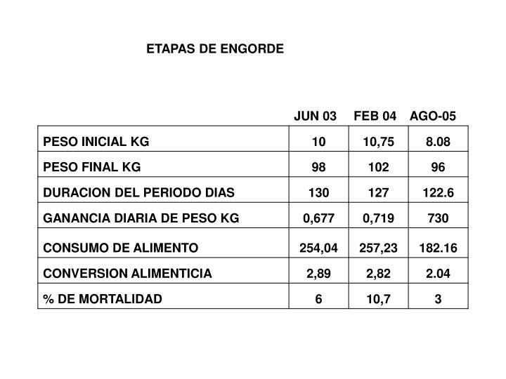 ETAPAS DE ENGORDE