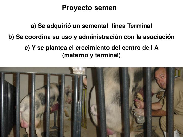 Proyecto semen