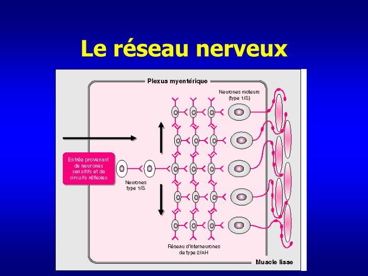 Le réseau nerveux
