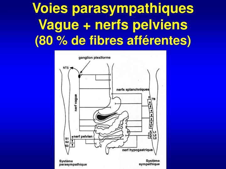 Voies parasympathiques Vague + nerfs pelviens