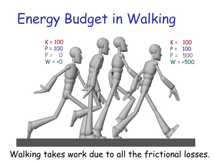 Energy Budget in Walking