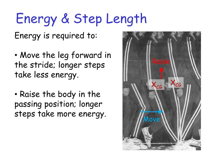Energy & Step Length