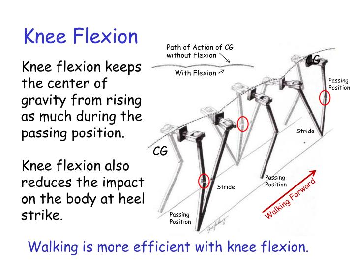 Knee Flexion