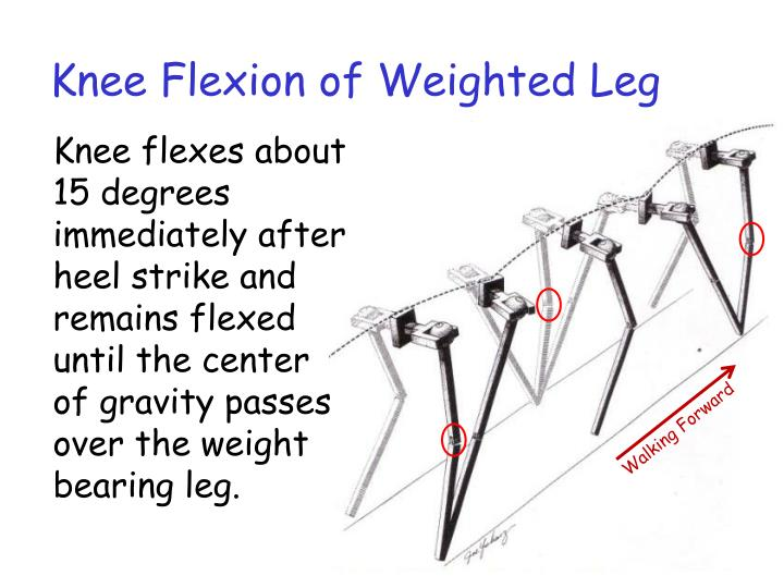 Knee Flexion of Weighted Leg