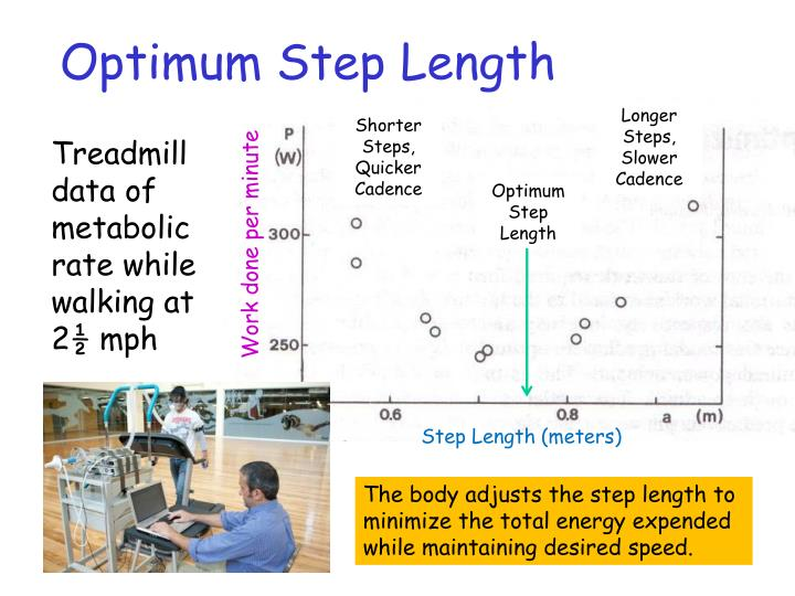 Optimum Step Length