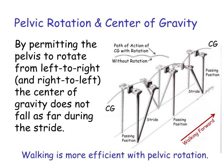 Pelvic Rotation & Center of Gravity