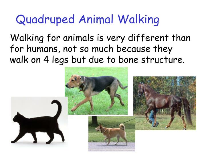Quadruped Animal Walking