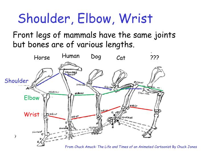Shoulder, Elbow, Wrist