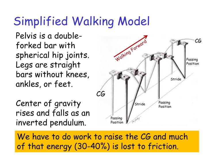 Simplified Walking Model