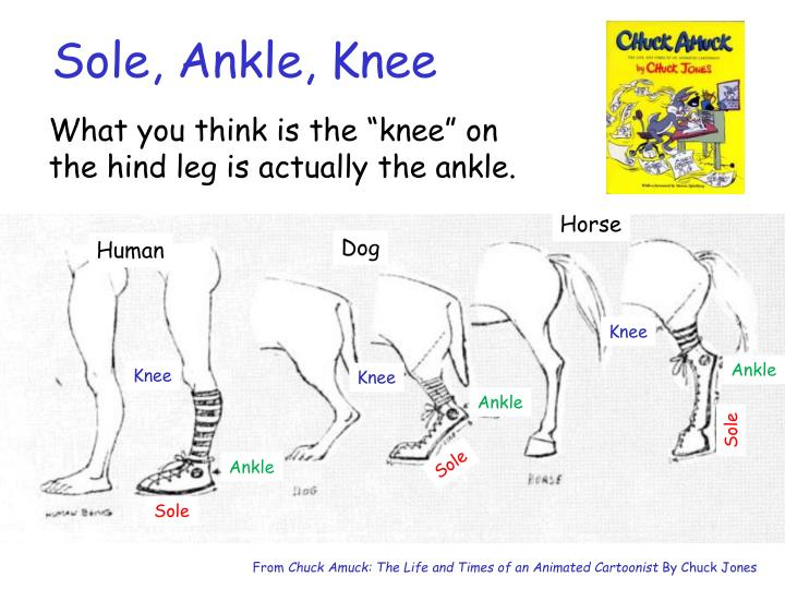 Sole, Ankle, Knee