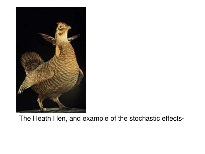 The Heath Hen, and example of the stochastic effects-