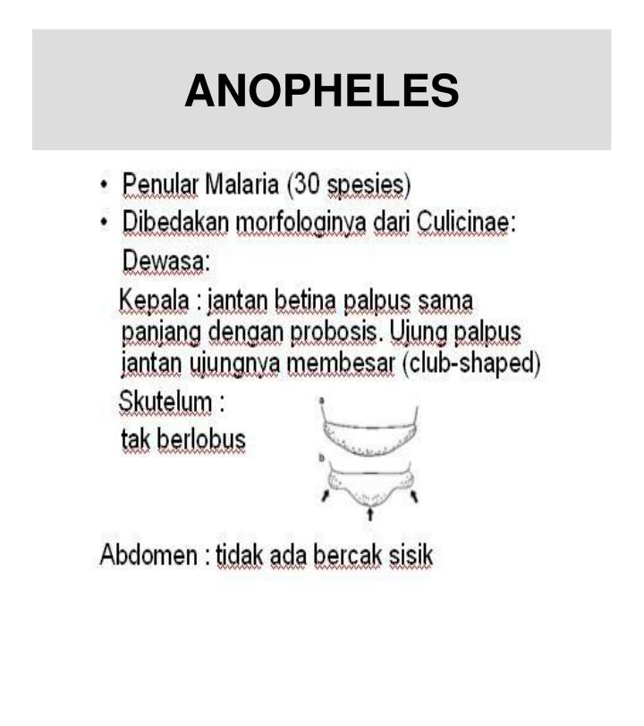 ANOPHELES