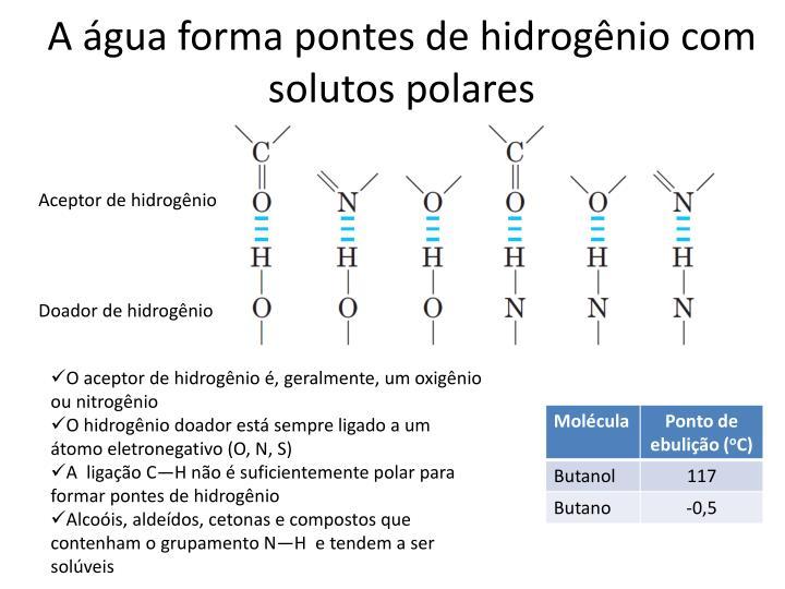 A água forma pontes de hidrogênio com solutos polares