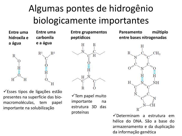 Algumas pontes de hidrogênio biologicamente importantes