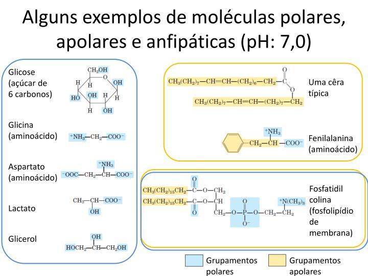 Alguns exemplos de moléculas polares, apolares e anfipáticas (pH: 7,0)