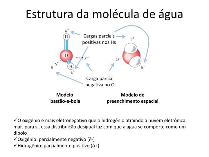 Estrutura da molécula de água