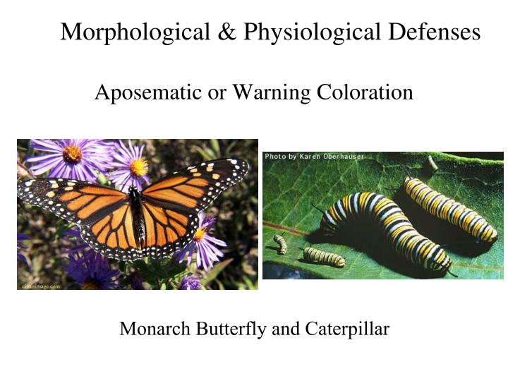 Morphological & Physiological Defenses