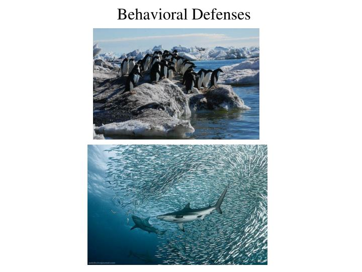 Behavioral Defenses