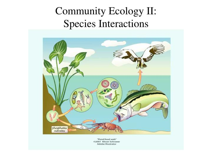 Community ecology ii species interactions