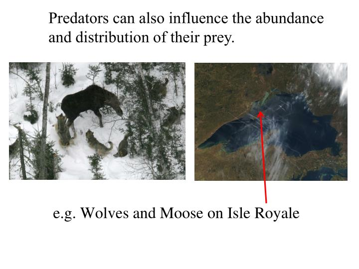 Predators can also influence the abundance