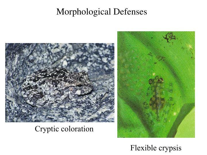 Morphological Defenses
