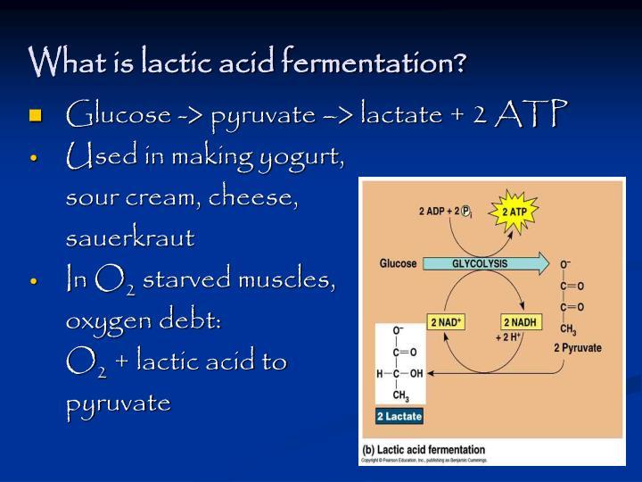 What is lactic acid fermentation?