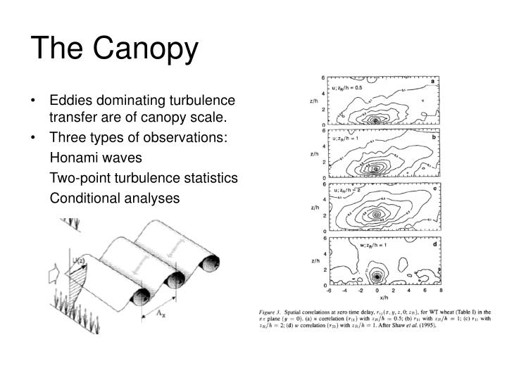 Eddies dominating turbulence transfer are of canopy scale.