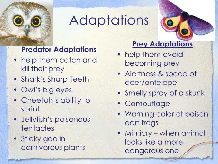 Predator Adaptations