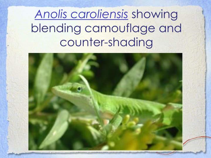 Anolis caroliensis