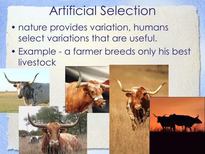 Artificial Selection