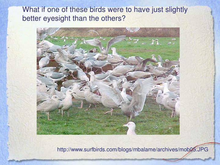 What if one of these birds were to have just slightly better eyesight than the others?