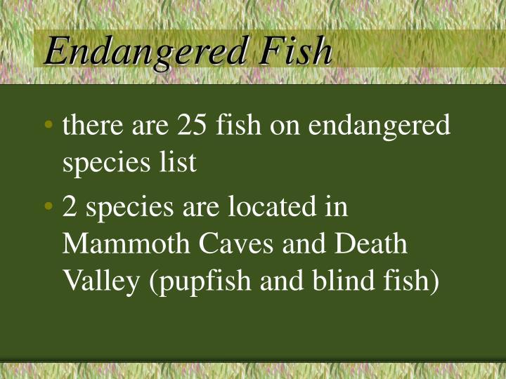 Endangered Fish
