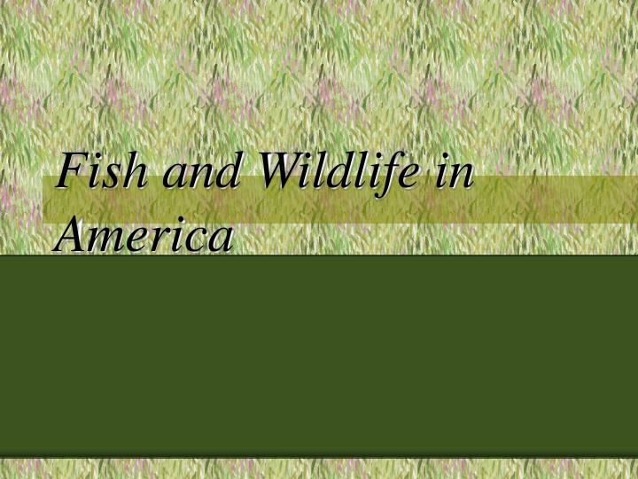 Fish and wildlife in america